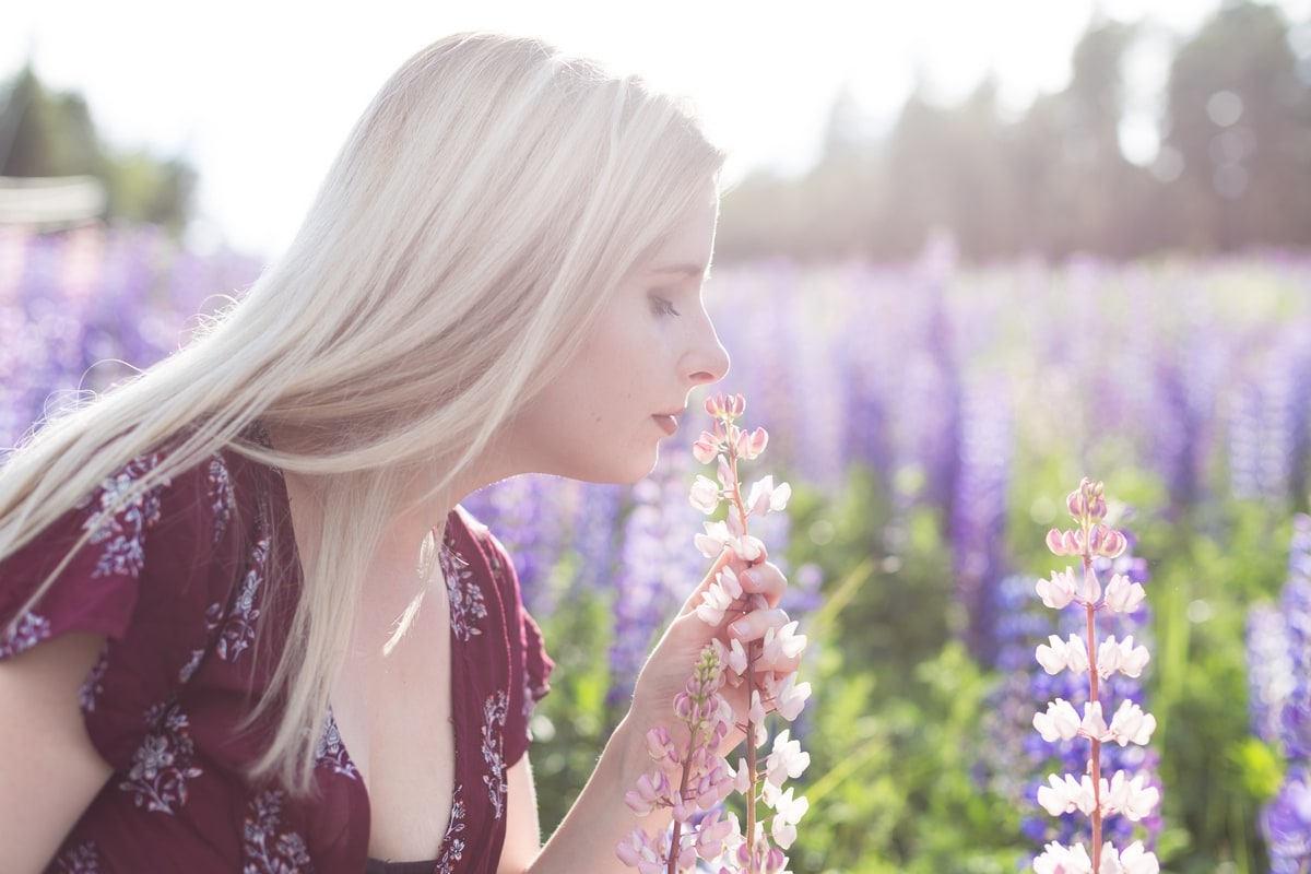 lupin field photo session