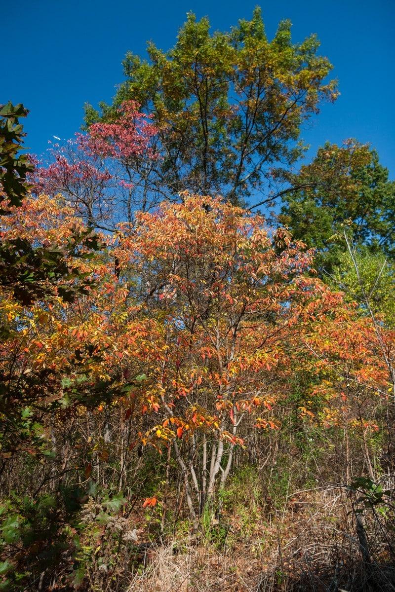 autumn in toronto