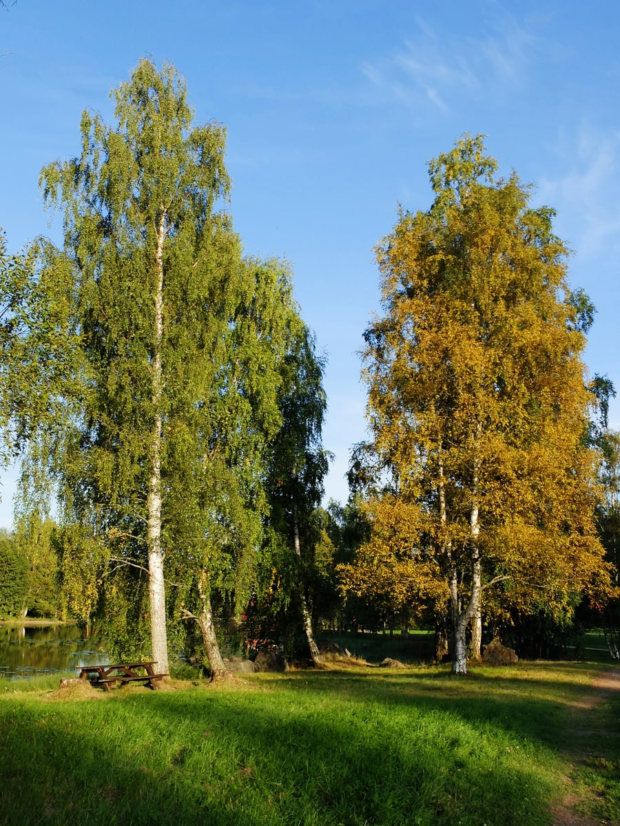 falun dalarna autumn