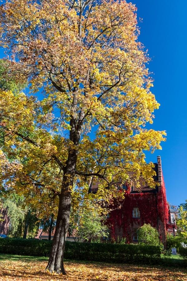 autumn uppsala