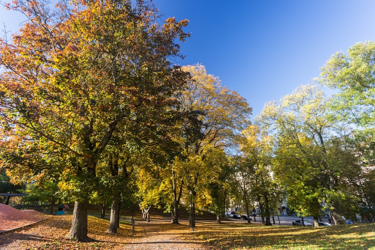 Sweden's Indian summer: the fall colours of Stockholm
