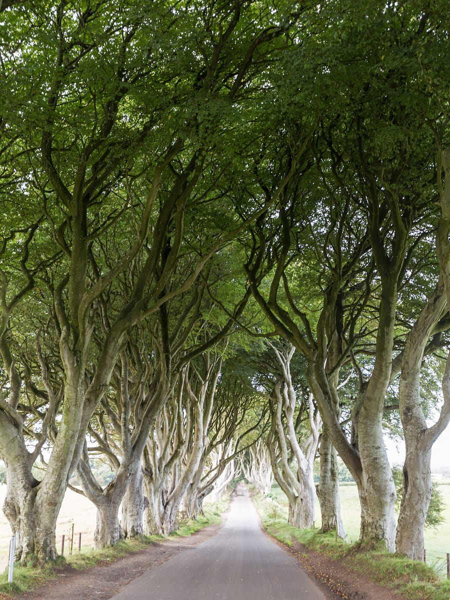 the dark hedges northern ireland itinerary